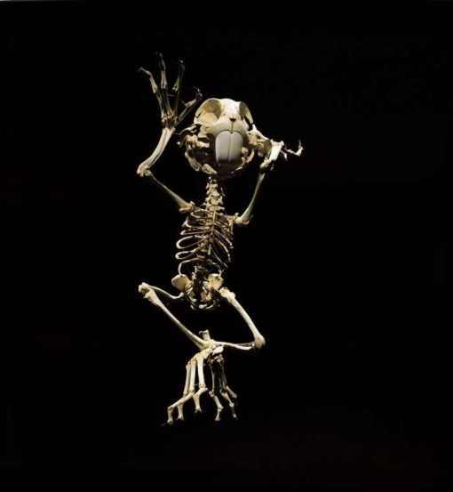 bugs-bunny-skeleton-1