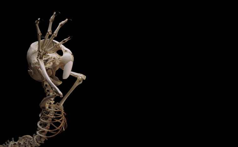 bugs-bunny-skeleton-2