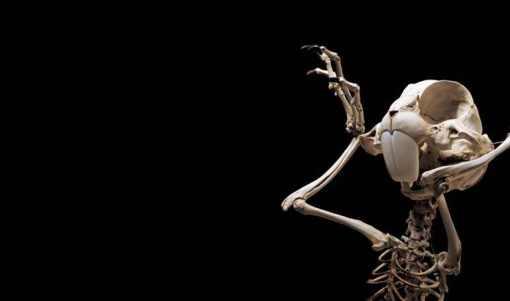 bugs-bunny-skeleton-3