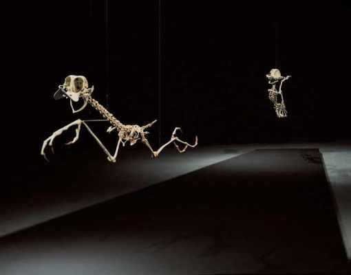 coyote-and-road-runner-skeleton-11