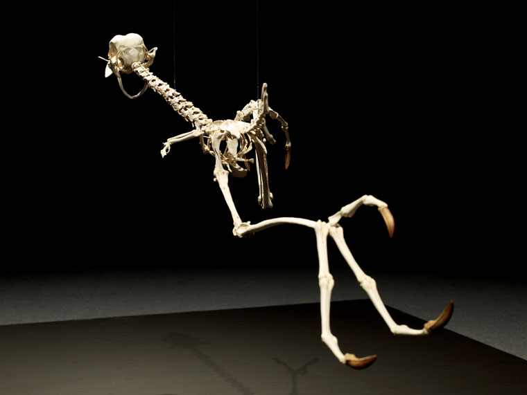coyote-and-road-runner-skeleton-5