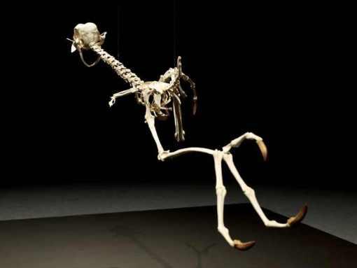 coyote-and-road-runner-skeleton-5