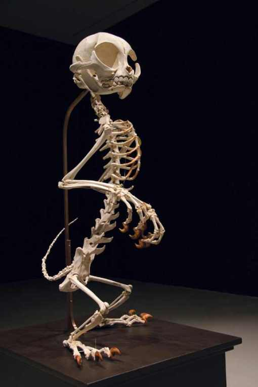 tom-and-jerry-skeleton-43
