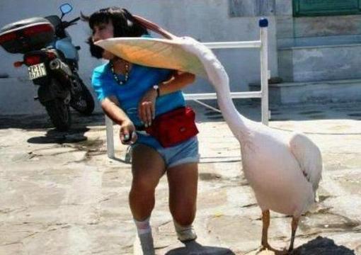 pelican_attacks_woman